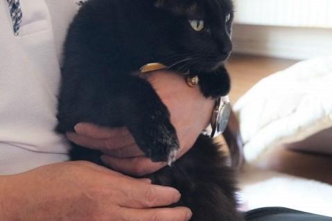飼い主に抱っこされている黒猫