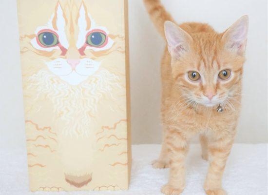 飼い猫とその似顔絵が描かれたお骨箱カバーが並んで立っている様子