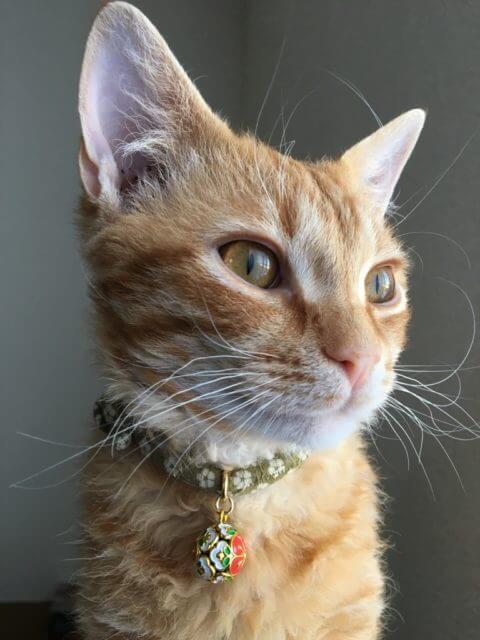 当社ねこ斎場のマスコット猫が窓の外を眺めている様子