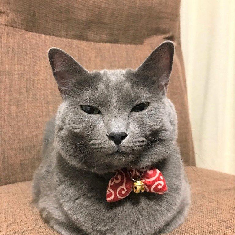 正面から撮影した香箱座りをしている当社のもう一匹のマスコット猫