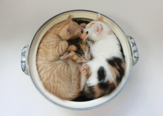 丸い土鍋の中に入っている猫達