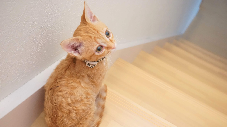家の階段のところで座っている子猫